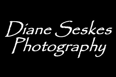 Diane Seskes Photography